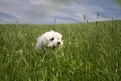 Im Gras spielen