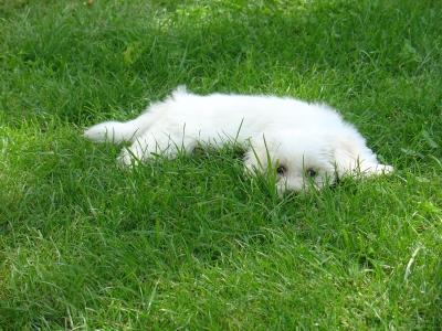 Im Gras liegen
