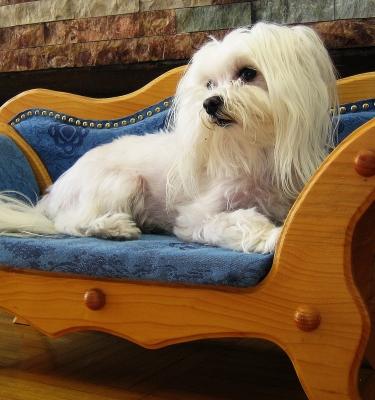 Auf der Hundecouch