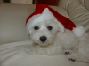 Malteser mit Weihnachtshut
