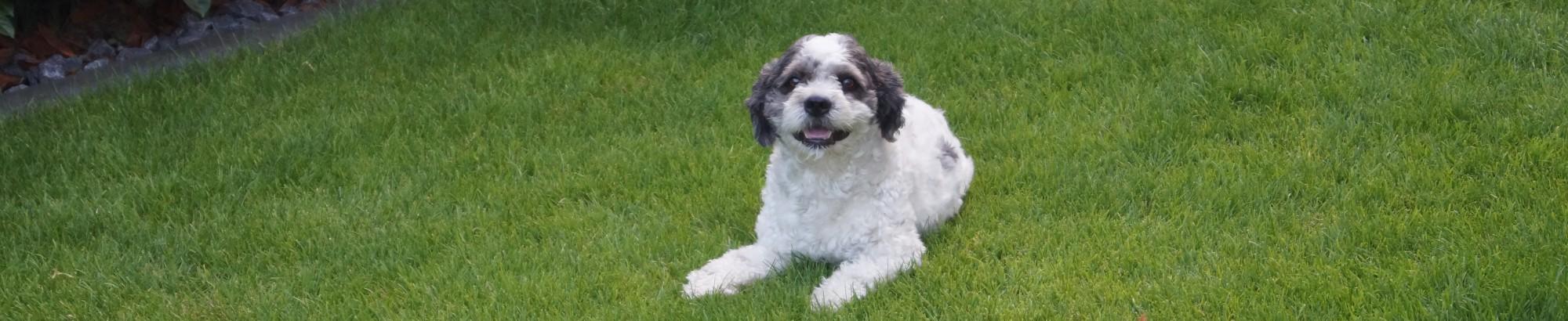 Malteser-Hund.com